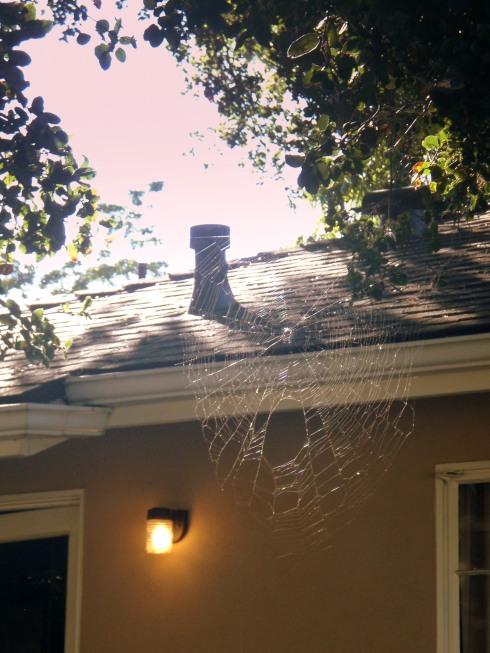 Lights and webs